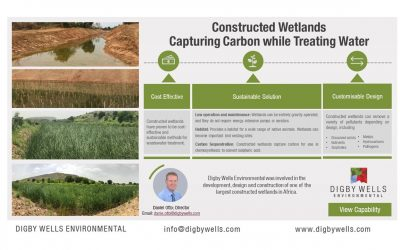 Constructed Wetlands: Capturing Carbon while Treating Water